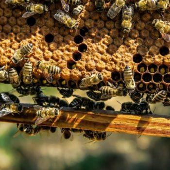Analyse der Authentizität von Bienenwachs, Labor QSI